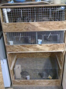 Quail cages with sliding trays
